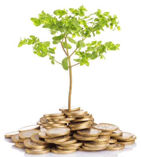 passive income image of coins and tree